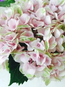 bloem voor Ma 2